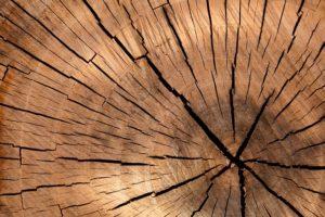 Auflagenbox Holz